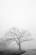 Denver Colorado Posters - Oak tree in fog Poster by David Bearden