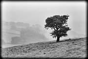 Misty Hills Farm Photos - Oak tree in the Mist. by Clare Bambers