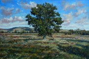 Vale Painting Prints - Oak Tree in the Vale of Pewsey Print by Andrew Taylor