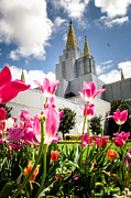 The Church Photo Prints - Oakland Pink Tulips Print by La Rae  Roberts