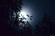 Moonlit Night Photos - Oakleaf Silhouettes by Maria Urso
