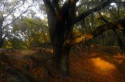 Live Oak Digital Art - Oakscape by David Lee Thompson