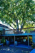 Wineries Photos - Oakwood Cellers by Jeff  Swan