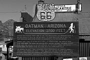 Mining Town Prints - Oatman Arizona Print by David Lee Thompson