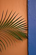 Gifts Originals - Oaxacan Palm by Jon Cretarolo