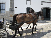 Hand Crafted Art - Obidos Horses Portugal by John A Shiron