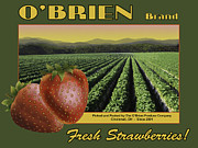 Strawberries Digital Art - OBrien Strawberries by John OBrien