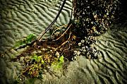 Botanical Beach Photos - Ocean Bouquet by Wenata Babkowski