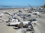 Driftwood Posters - Ocean Coastal art prints Driftwood Beach Poster by Baslee Troutman Fine Art Photography