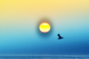 Sun Framed Prints Prints - Ocean Sunrise Print by Bill Cannon
