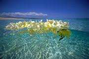Plumeria Photos - Ocean Surface by Vince Cavataio - Printscapes