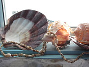 Sill Photo Originals - Ocean Treasures by Amy Bradley