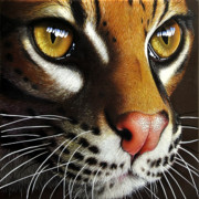 Wildcats Paintings - Ocelot by Jurek Zamoyski