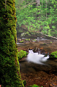 Gentle Cascades Art - Oconaluftee River Wilderness by Thomas Schoeller