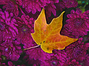Fallen Leaf Framed Prints - October Hues Framed Print by Paul Wear