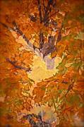 October In Washington Print by Gwyn Newcombe