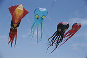 Kites Posters - Octopus And Squid-shaped Kites Fly Poster by Stephen Sharnoff