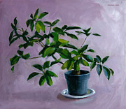 Potted Plant Paintings - Octopus Plant by Douglas Simonson