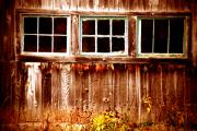 Barn Windows Photos - Odd one Out by Emily Stauring