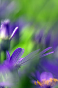 Purple Flowers Photo Prints - Ode To Monet Print by Rebecca Cozart