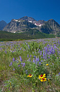 Many Glacier Photos - Of Peaks And Posies by Katie LaSalle-Lowery