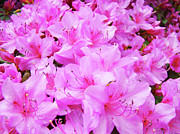 Azalea Posters - OFFICE ART Azalea Flowers Botanical 31 Azaleas Giclee Art Prints Baslee Troutman Poster by Baslee Troutman Art Print Collections
