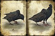 Starlings Digital Art Metal Prints - Oh No You DIDNT Metal Print by Lois Bryan