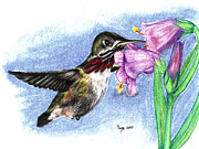 Pencil Drawing Pastels Prints - Oh The Humming Bird Print by Russ  Smith