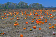 Peter  McIntosh - Ohio Pumpkin Patch 2