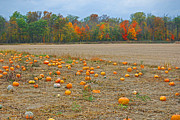 Peter  McIntosh - Ohio Pumpkin Patch