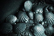 Shellfish Prints - Oil Spill Print by Carlos Caetano