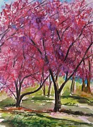 Tree Blossoms Drawings - Okame Cherries by John  Williams
