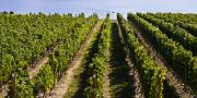 Wine Vineyard Photos - Okanagan Vineyard by Marion McCristall