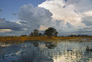 Backlighting Prints - Okavango Delta Evening Print by Sandra Bronstein