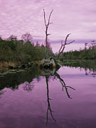 "\""reflection Photographs\\\"" Posters - Okefenokee Poster by Jim Wright"