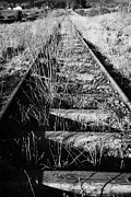 Railroad Line Prints - Old Abandoned Great Southern And Western Railway Line In County Sligo Republic Of Ireland Print by Joe Fox