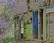 Susan Leggett Posters - Old Abandoned House Poster by Susan Leggett