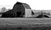 Farming Framed Prints Prints - Old Barn 2 Print by Kami McKeon