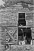 Canvas  Black And White Cat Photos - Old Barn Door in Black and White by Debra and Dave Vanderlaan