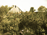 Alisha Greer - Old Barn In Ohio