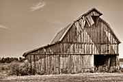 Arkansas Prints - Old Barn in Sepia Print by Douglas Barnett