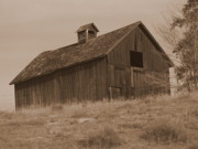 Ramshackle Posters - Old Barn in Washington Poster by Carol Groenen