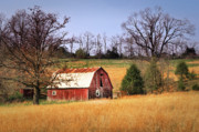 Tamyra Ayles Art - Old Barn by Tamyra Ayles