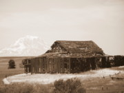 Mt Hood Posters - Old Barn with Mount Hood in Sepia Poster by Carol Groenen