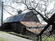 Farmstead Posters - Old Barn with Tree Watercolor Poster by Laurie With
