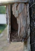 Pine Needles Photo Originals - Old Birdhouse by Kenna Westerman
