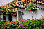 Red Bushes Framed Prints - Old buildings in Puerto Vallarta Mexico Framed Print by Elena Elisseeva