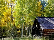 Colorado Mountain Prints Prints - Old Cabin in the Golden Aspens Print by Donna Parlow