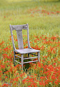 Left Alone Posters - Old Chair in Wildflowers Poster by Jill Battaglia