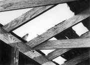 Barn Drawing Drawings - Old Chicken Coop Roof by Craig Carlson